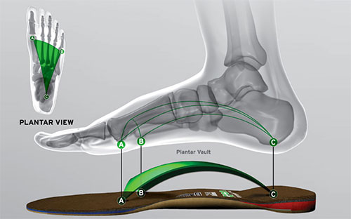 ORTHODICS services in San Francisco